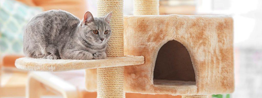 Cat Houses Thumbnail