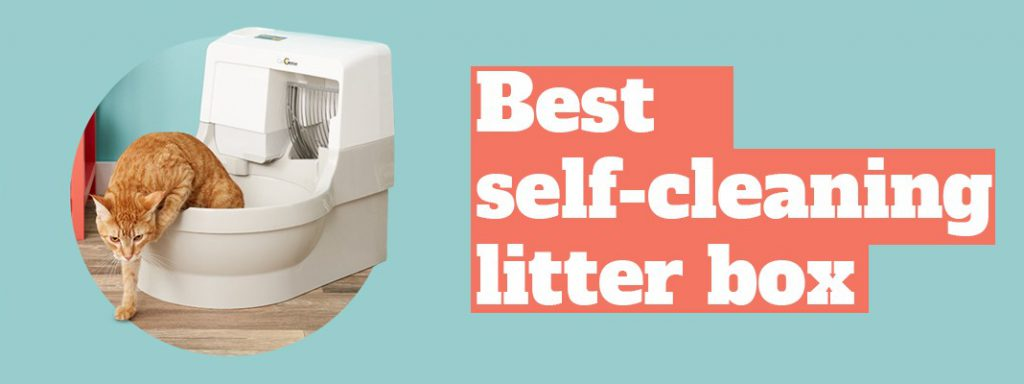 Best self-cleaning litter box Thumbnail