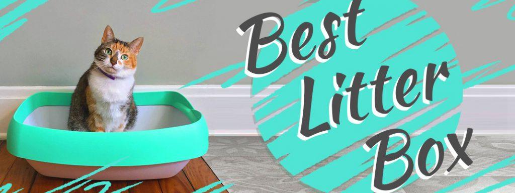 Best Litter Box Thumbnail